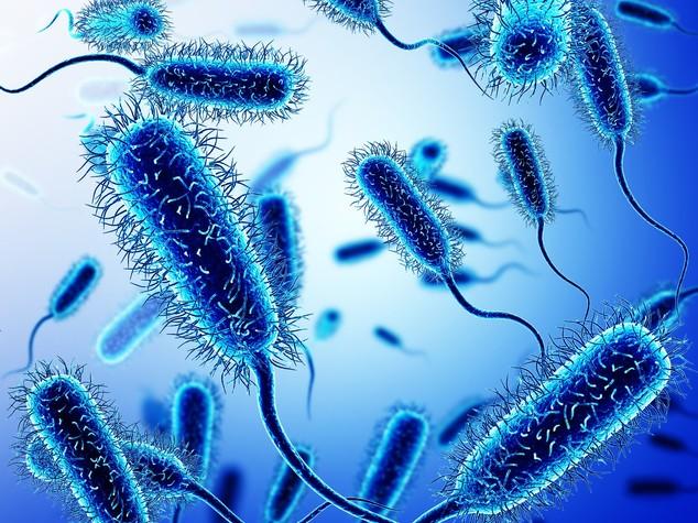 batteri bioiris