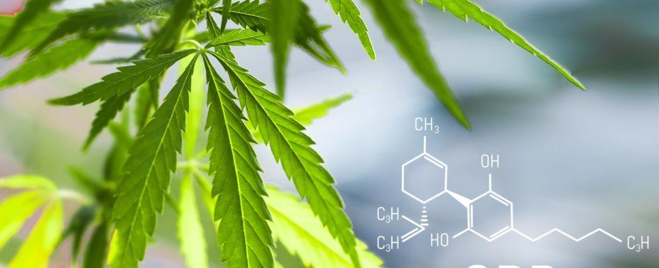 cannabis- bioiris