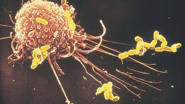 sistema immunitario by Bioiris®