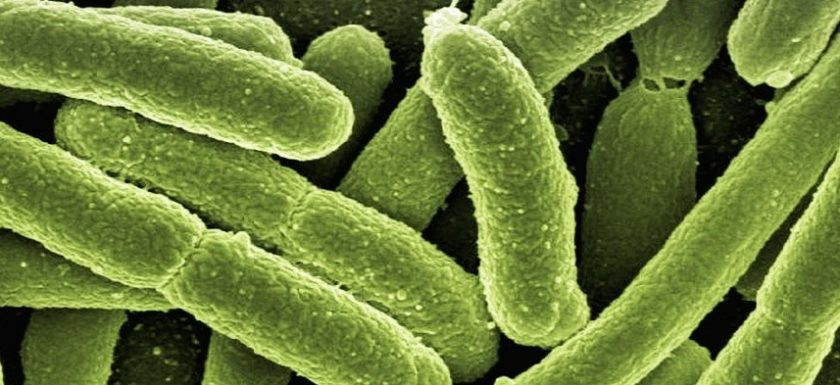 batteri-cellula batterica by Bioiris