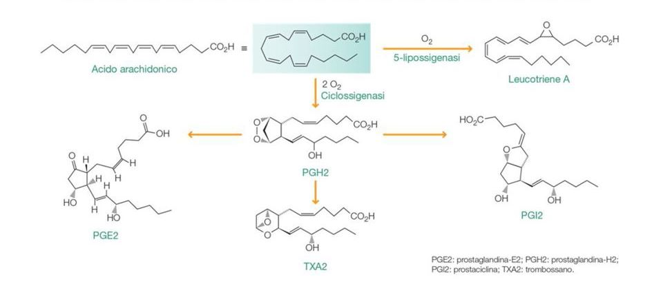 Biosintesi delle prostaglandine