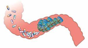 antibiotic-resistance- bioiris®