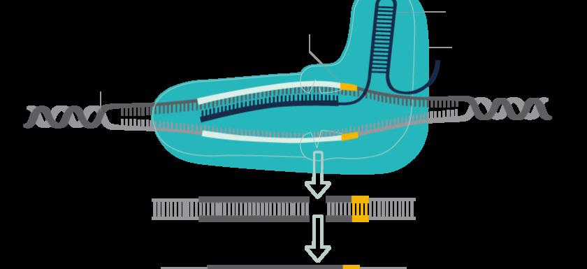 crispr-cas9-genome-bioiris